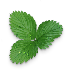 Wellpak Strawberry Leaves
